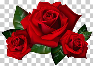 Rose, rote Rosen, rote Kunst 3d PNG Clipart