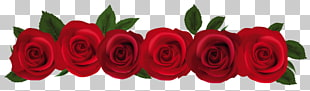 rote Rose, rote Rosen, sieben rote Rose blüht Abbildung PNG Clipart
