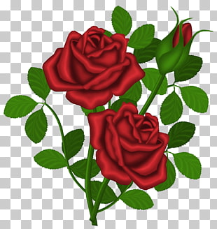 rote Rose, rote Rosen, rote Rose Abbildung PNG Clipart