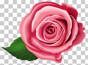 Rose, rote Rose Abbildung PNG Clipart