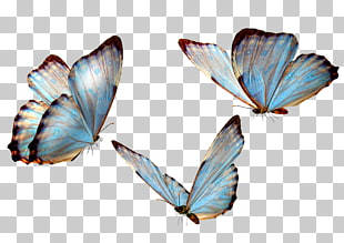 drei Schmetterlinge, Schmetterling, Schmetterling PNG Clipart
