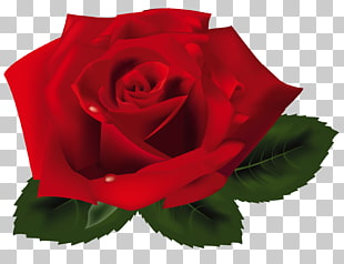 Rose, rote Rose, rote Rose PNG Clipart