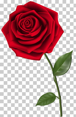Rose, einzelne rote Rose, rote Rose PNG Clipart