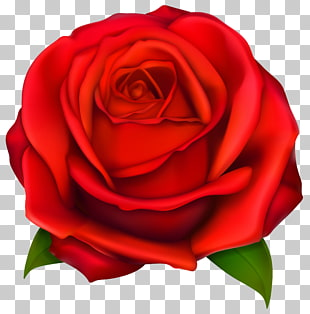 Rose, rote Rose, rote Rose Blume Abbildung PNG Clipart